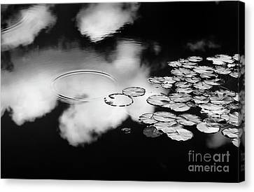 Aquatic Plant Canvas Print - Lily Pond by Tim Gainey