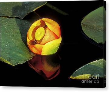 Canvas Print featuring the photograph Lily Reflection by Sandra Bronstein
