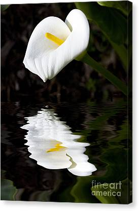 Madonna Canvas Print - Lily Reflection by Sheila Smart Fine Art Photography