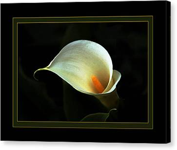 Lily Canvas Print by Richard Gordon