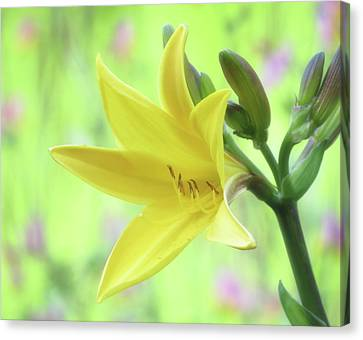 Lily Spring Close Up - Daylily Canvas Print by MTBobbins Photography