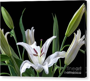 Canvas Print featuring the photograph A White Oriental Lily Surrounded by David Perry Lawrence
