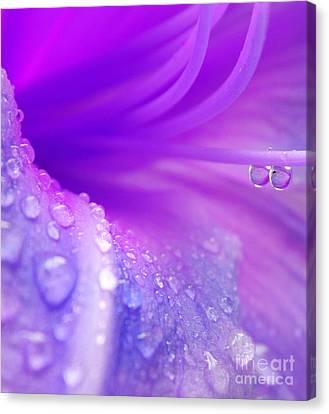 Lily Tears Canvas Print