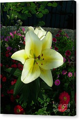 Lily Upon The Pond Canvas Print