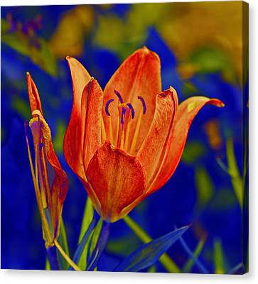 Canvas Print featuring the photograph Lily With Sabattier by Bill Barber