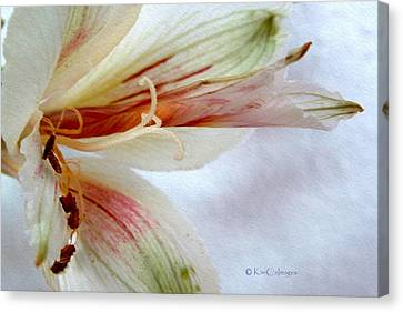 Canvas Print featuring the digital art Lily With Texture by Kae Cheatham