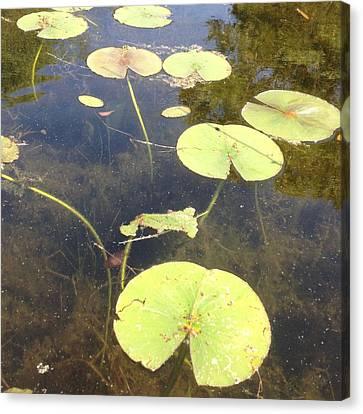 Lilypads Canvas Print by Lori Thompson