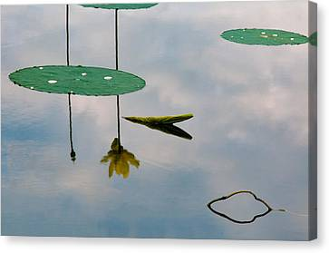 Lily's Reflection Canvas Print by Carolyn Dalessandro