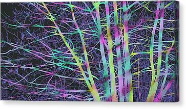 Limbs And Twigs Canvas Print
