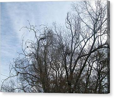 Canvas Print featuring the photograph Limbs In Air by Jewel Hengen
