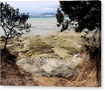 Lime Bay Tasmania 5 Canvas Print