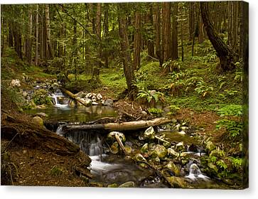 Lime Kiln Creek 1 Canvas Print by Gary Brandes