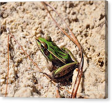 Canvas Print featuring the photograph Lime-like by Al Powell Photography USA