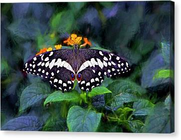 Canvas Print featuring the photograph Lime Swallow Tail by James Steele