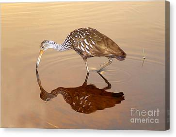 Limpkin In The Mirror Canvas Print by David Lee Thompson