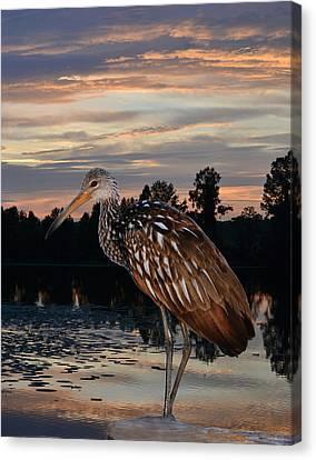 Limpkin - Morning Sunrise Canvas Print