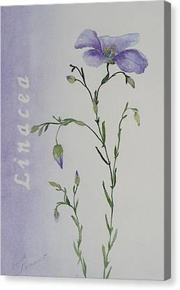 Linacea Canvas Print