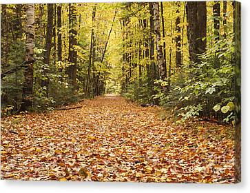 Lincoln Woods Trail  - White Mountains New Hampshire Canvas Print by Erin Paul Donovan