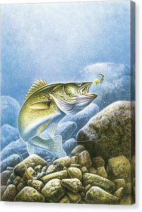 Jon Q Wright Canvas Print - Lindy Walleye by JQ Licensing