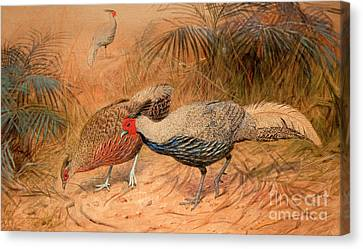 Pheasant Canvas Print - Lineated Kaleege by Joseph Wolf