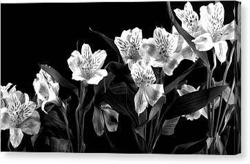 Lined Up Canvas Print by Diane Reed