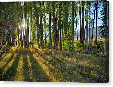 Canvas Print featuring the photograph Lines by Mary Hone