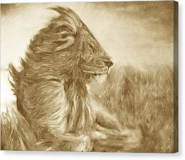 Lion Canvas Print by Adrienne Martino