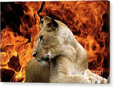 Lion And Fire Canvas Print by Inspirational Photo Creations Audrey Woods