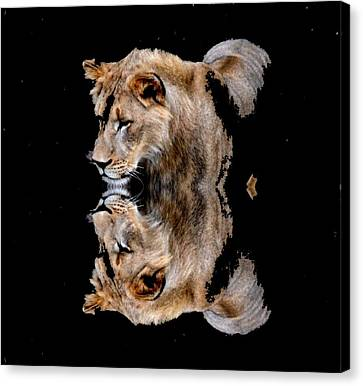 Lion And It's Reflection Canvas Print by Anand Swaroop Manchiraju