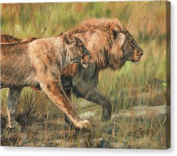Lion And Lioness Canvas Print by David Stribbling
