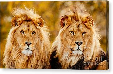 Lion Brothers II Canvas Print