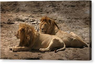 Lion Brothers Canvas Print by Joseph G Holland