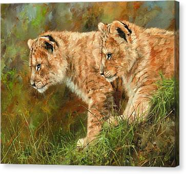 Lions Canvas Print - Lion Cubs by David Stribbling