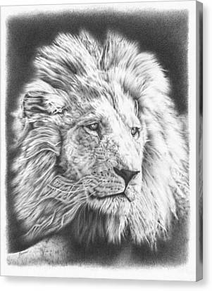 Large Mammals Canvas Print - Fluffy Lion by Remrov