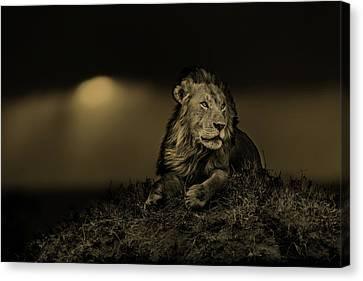 Lion Earless At Sunset In Masai Mara, Kenya Canvas Print