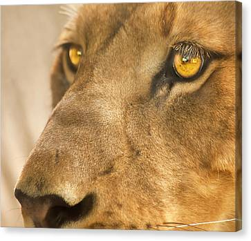 Lion Face Canvas Print by Carolyn Marshall