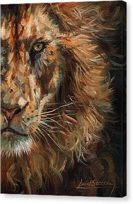 Close Up Canvas Print - Lion Face by David Stribbling