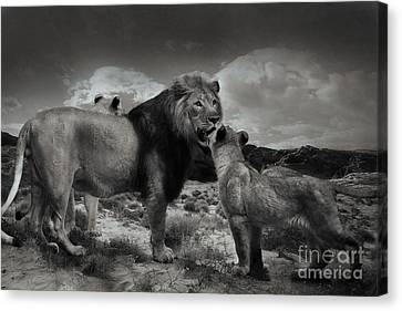 Canvas Print featuring the photograph Lion Family by Christine Sponchia