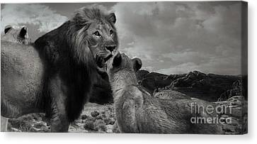 Canvas Print featuring the photograph Lion Family Panorama by Christine Sponchia
