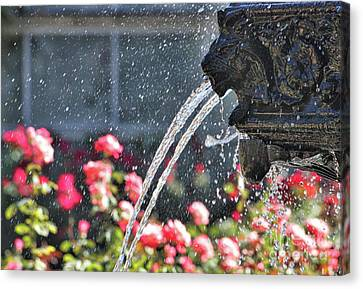 Lion Fountain In Profile Canvas Print
