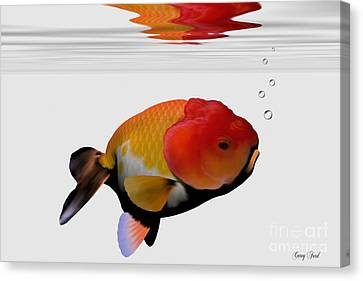Lion-head Goldfish Canvas Print by Corey Ford