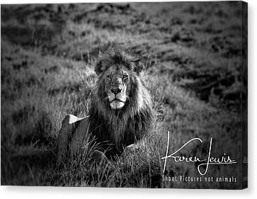 Canvas Print featuring the photograph Lion King by Karen Lewis