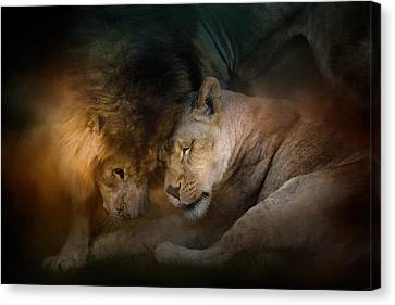 Lion Love Canvas Print by Jai Johnson