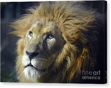 Canvas Print featuring the photograph Lion Portrait by Savannah Gibbs
