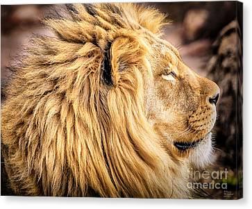 Lion Canvas Print - Lion Profile by David Millenheft