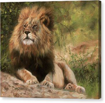 Canvas Print featuring the painting Lion Resting by David Stribbling