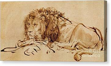 Lion Resting Canvas Print by Rembrandt