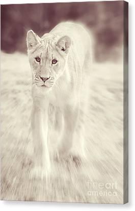 Lion Spirit Animal Canvas Print