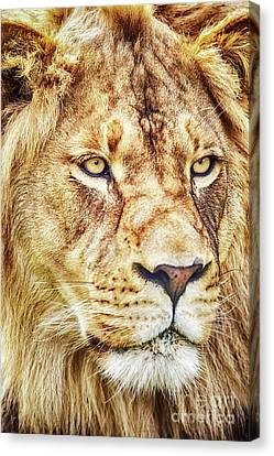 Lion-the King Of The Jungle Large Canvas Art, Canvas Print, Large Art, Large Wall Decor, Home Decor Canvas Print