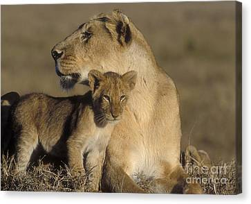 Lioness And Her Cub  Canvas Print by Sandra Bronstein